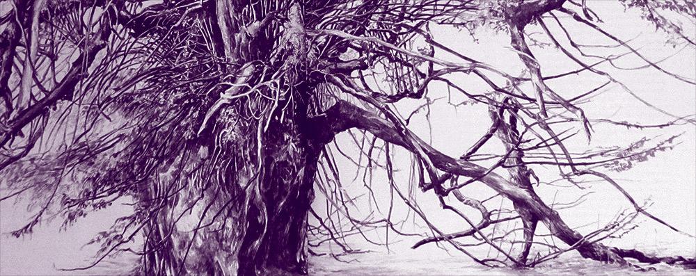 Anckerwyke Yew